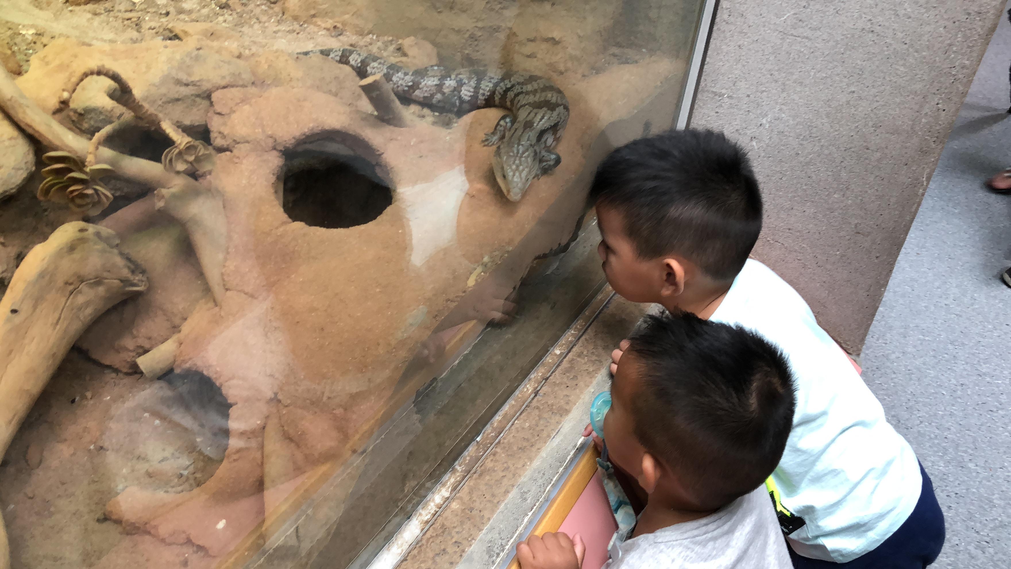 木柵動物園的蜥蜴