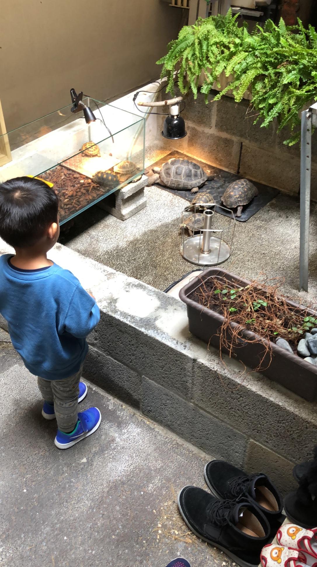 蝌蚪老師生態課的烏龜