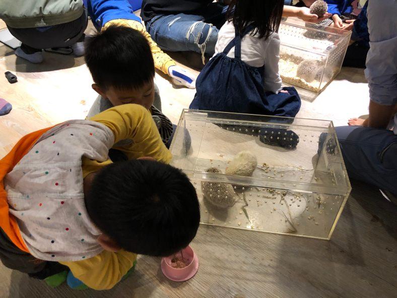 蝌蚪老師的課--餵食小刺蝟