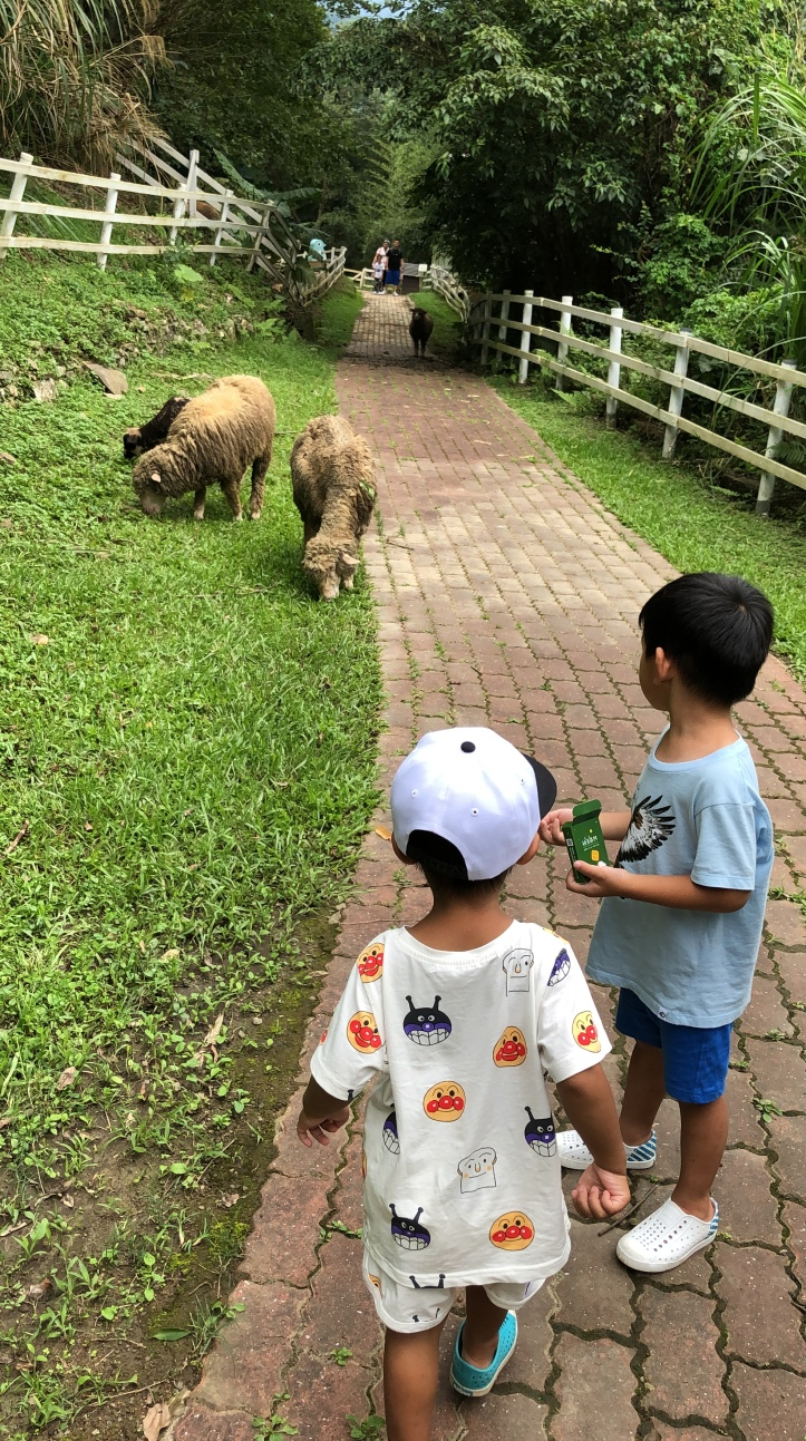 桃園復興 綠光森林富野綿羊牧場
